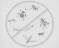 شركة مكافحة حشرات بالرياض مع الضمان