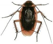 شركة مكافحة حشرات بالرياض 0546871809