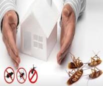 شركة مكافحة حشرات رش مبيدات بالاحساء