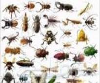 0558592765 شركة مكافحة حشرات بجازان نمل ابيض - بق - صراصير - وزغ-