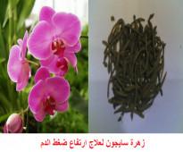 يتوفر لدينا زهرة سايجون 00963988401406 و مظاريف و كبسولات بلوتوماكس لعلاج ارتفاع ضغط الدم