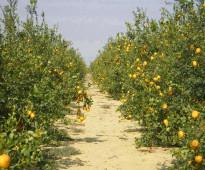 مزرعة.. من الطراز الرفيع  بالمغرب مدينة مكناس 260 هكتار