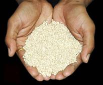 للبيع 76 طن سمسم أبيض اثيوبي