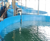 الاستزراع السمكي المغلق RAS استثمار الحاضر والمستقبل