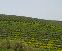 للبيع مزرعة   بالمغرب  97 هكتار
