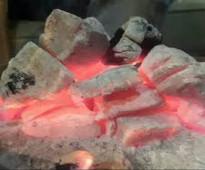 فحم الشعلة الذهبي