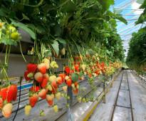 خبير إستثمارات زراعية (هيدروبونيك و عضوية) 25عام خبرة علمية و عملية