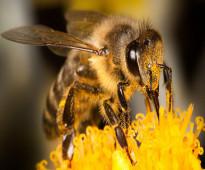عسل نحل طبيعي من الزهور