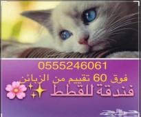 فندقة طيور وقطط - الرياض