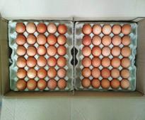 للبيع بيض المائدة الاوكراني بأسعار منافسة